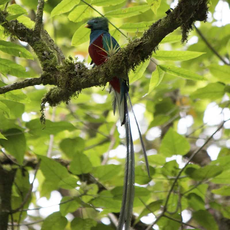 Birdwatching in the Chiriqui Highlands