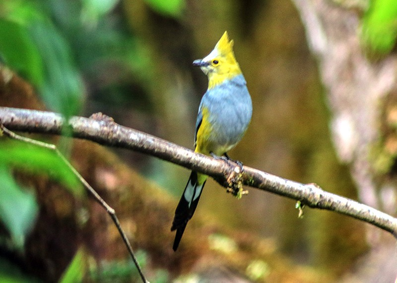 Birdwatching chiriqui 2